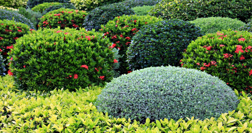 flower bed weed prevention – andrews turf and tree care